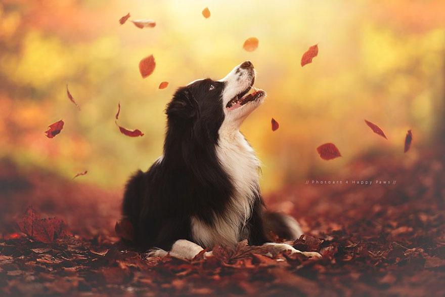 autumn-dog-photography-anne-geier-1