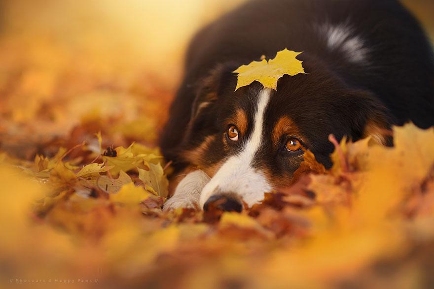 autumn-dog-photography-anne-geier-12