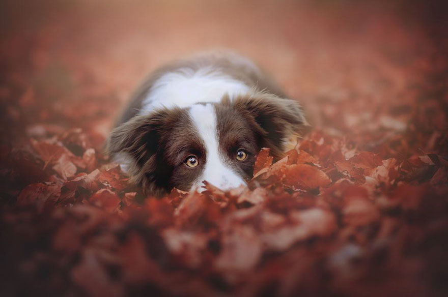 autumn-dog-photography-anne-geier-17