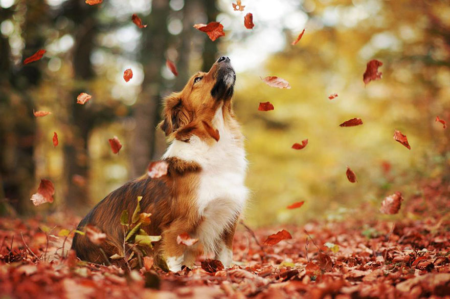 autumn-dog-photography-anne-geier-18