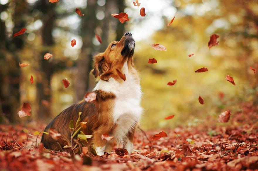 autumn-dog-photography-anne-geier-18