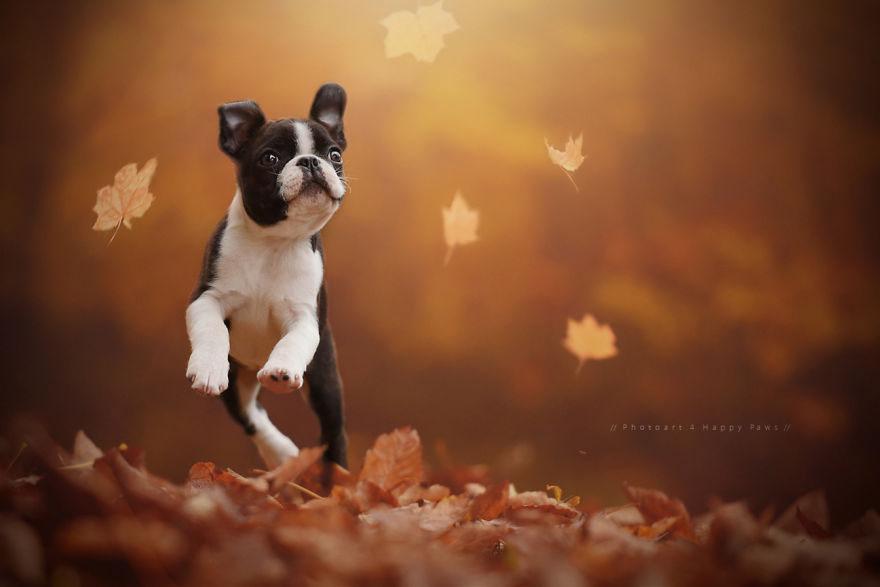 autumn-dog-photography-anne-geier-19