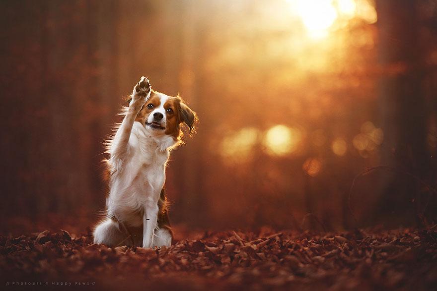 autumn-dog-photography-anne-geier-21
