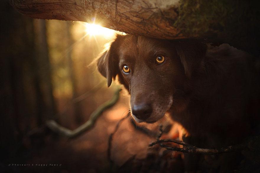autumn-dog-photography-anne-geier-25