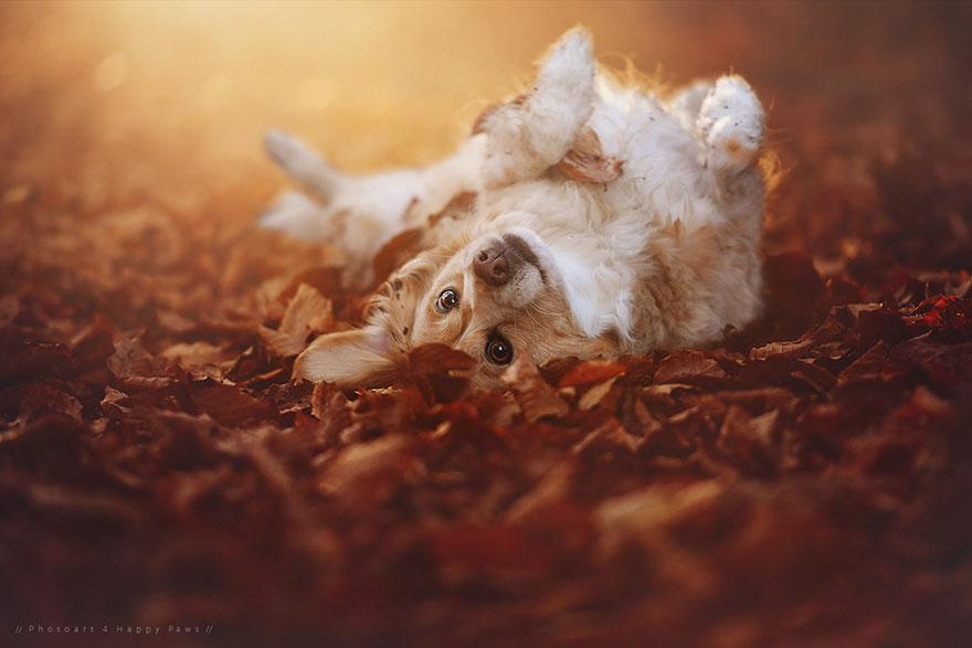 autumn-dog-photography-anne-geier-26