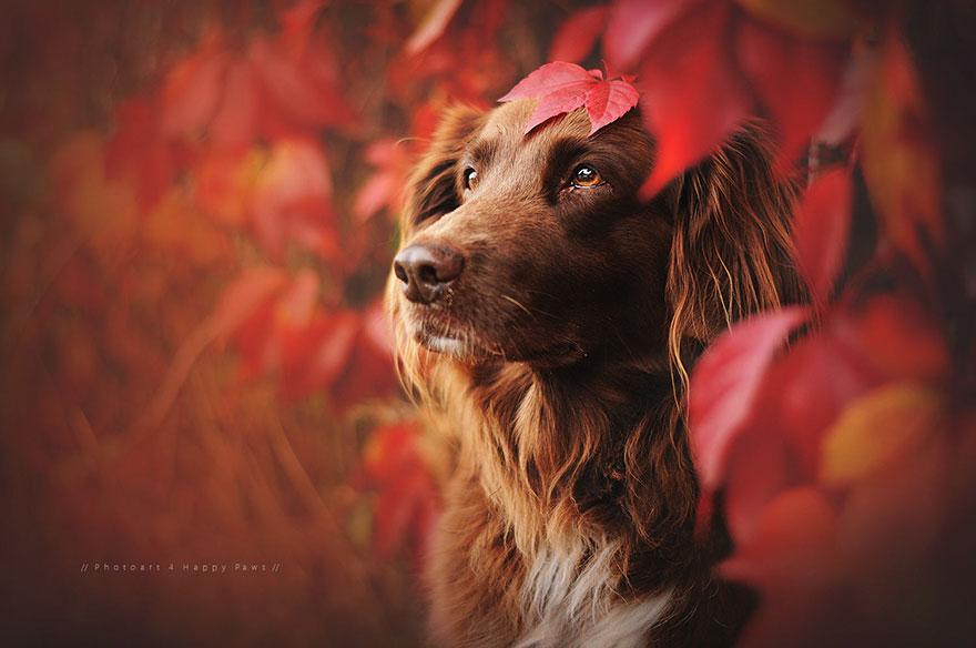 autumn-dog-photography-anne-geier-32