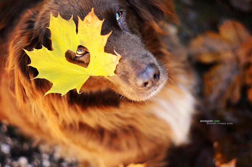 autumn-dog-photography-anne-geier-34