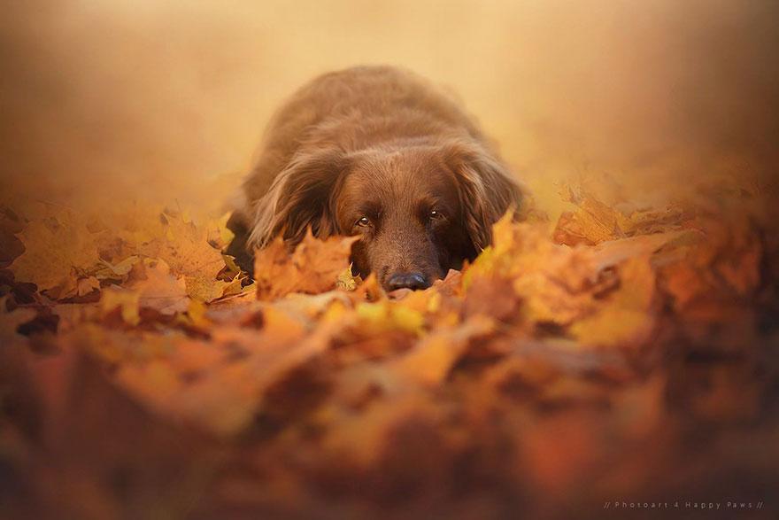 autumn-dog-photography-anne-geier-44