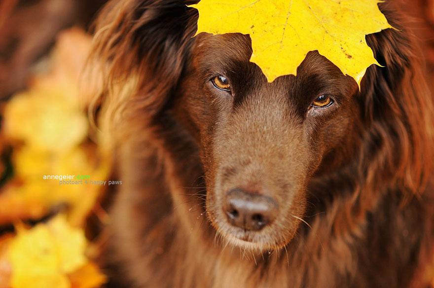 autumn-dog-photography-anne-geier-47
