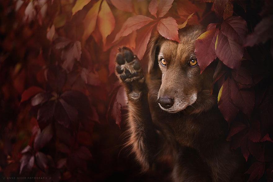 autumn-dog-photography-anne-geier-54