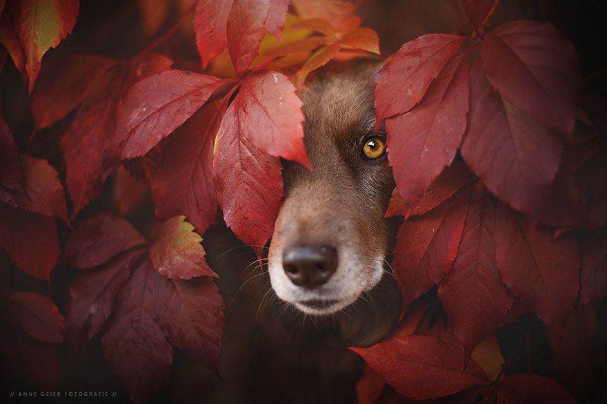 autumn-dog-photography-anne-geier-62