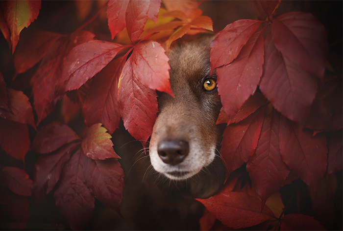 Photographer Captures Soulful Portraits Of Dogs Enjoying Autumn