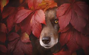 Photographer Captures Soulful Portraits Of Dogs Enjoying Autumn