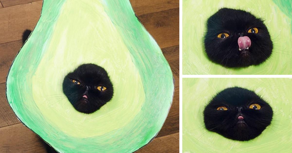 & Meet AvoCATo The Many-Faced Cat (8 Pics) | Bored Panda