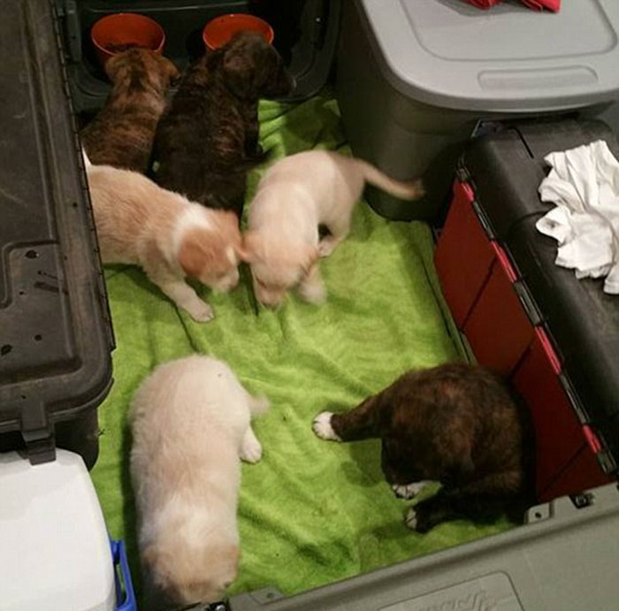 bachelor-party-stray-dog-puppies-4