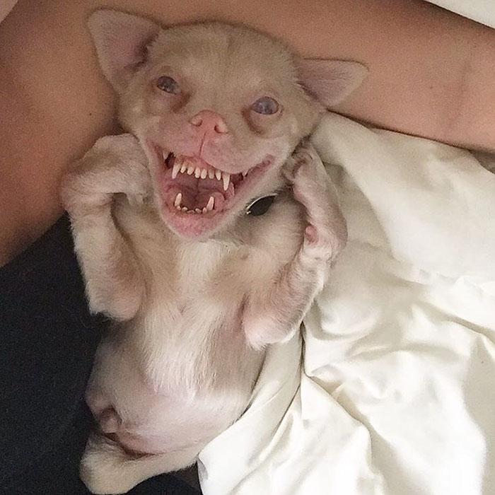 bat-dog-tucker-7