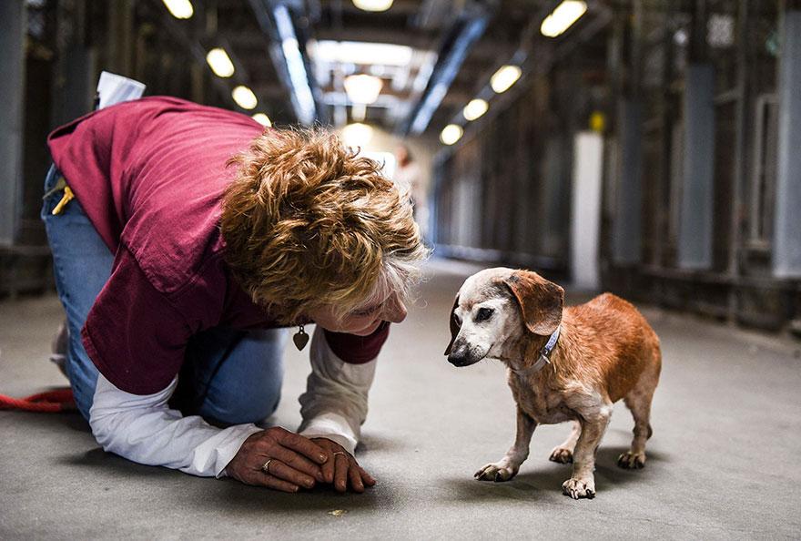 blind-shelter-dog-muneca-clings-3