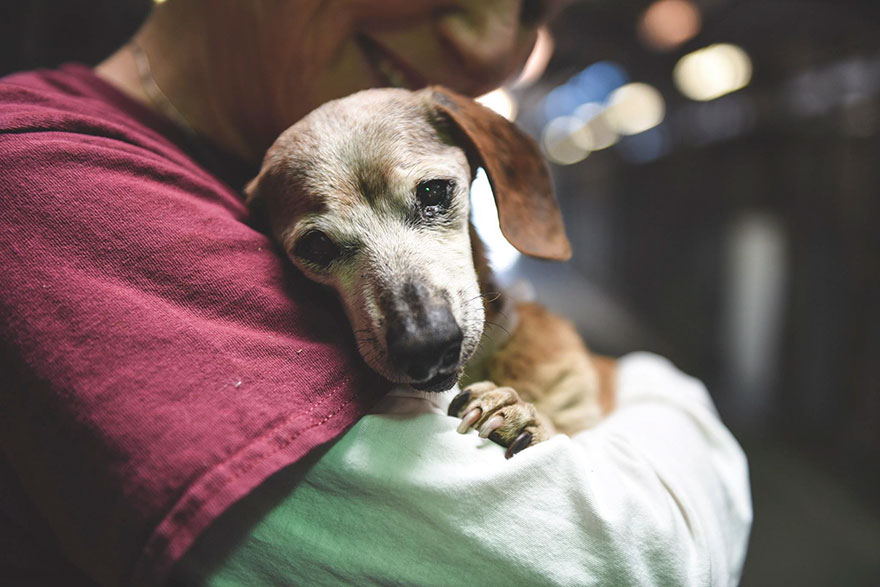 blind-shelter-dog-muneca-clings-4