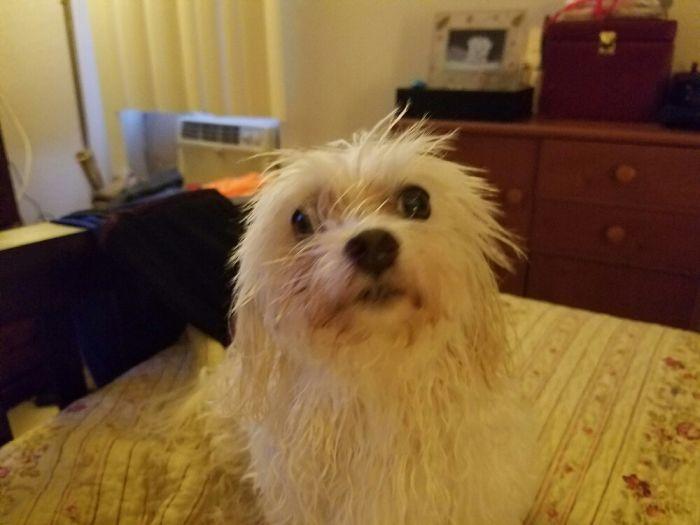 Aww I'm All Wet