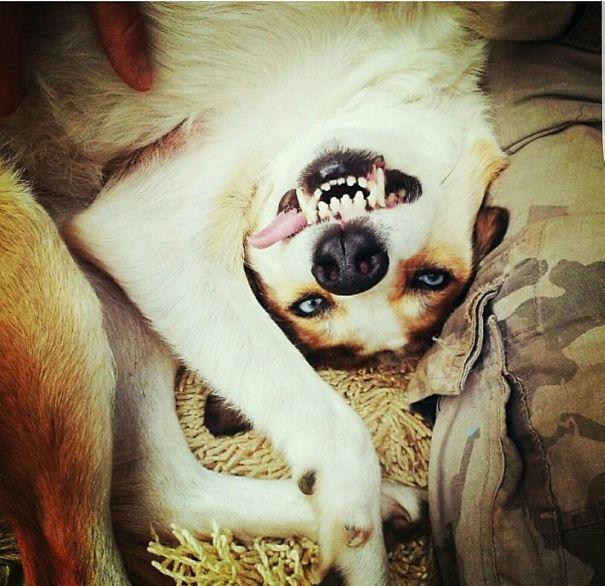 My Dog Fly