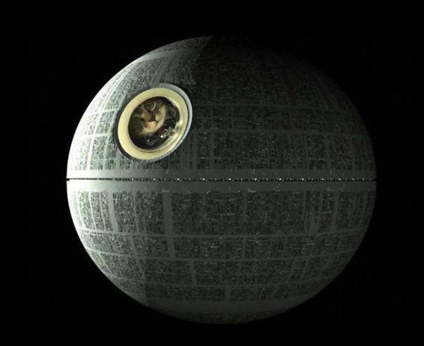 Death Star Cat