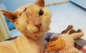 Humans Pour Acid On Cat's Face, But He Still Loves And Trusts People