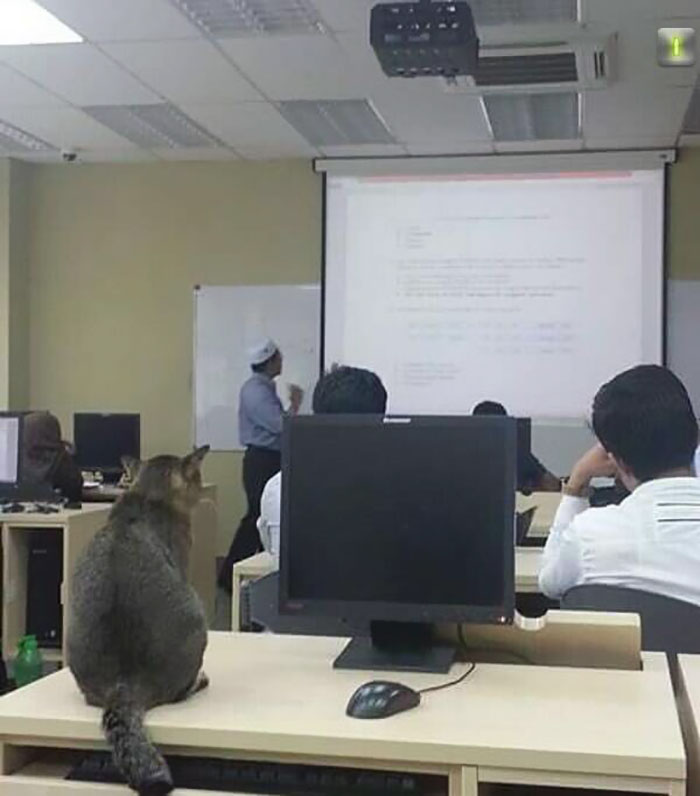 cat-sleeps-university-lecture-malaysia-3