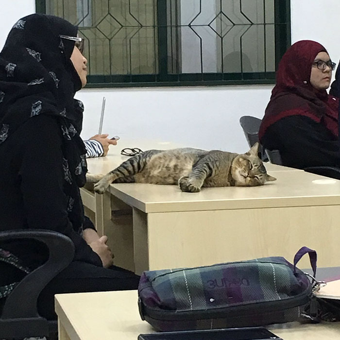 cat-sleeps-university-lecture-malaysia-4