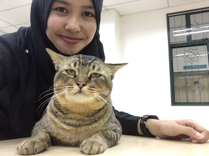 cat-sleeps-university-lecture-malaysia-5