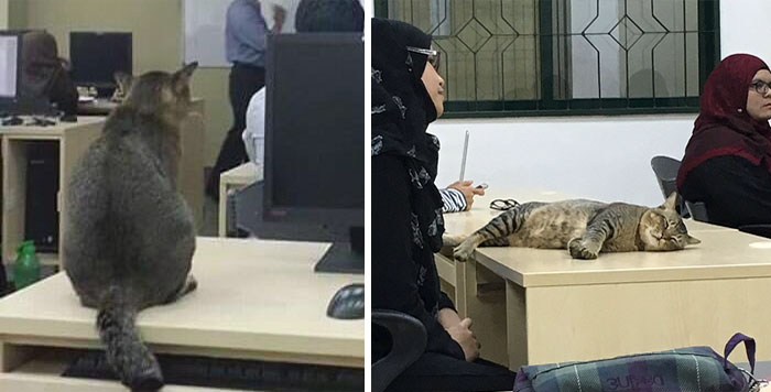 Cat Walks Into University Lecture, Does What Every Student Would Do