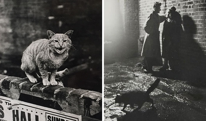 These Iconic 'Cats Of London' Give Us A Glimpse Into The 1950s