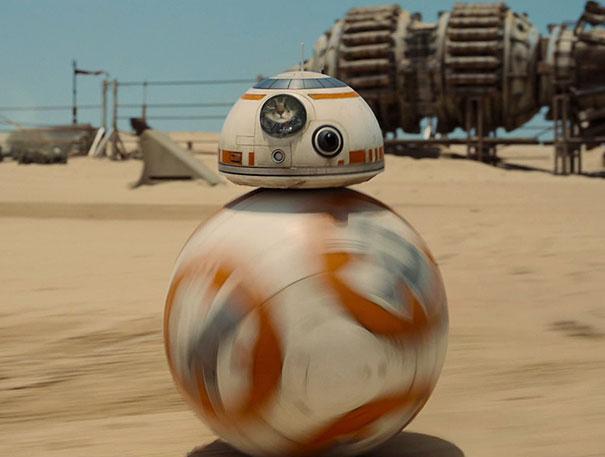 BB-8 Cat!
