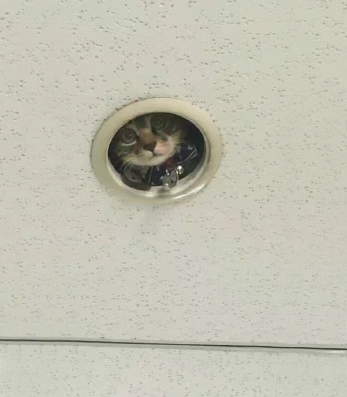 challenge-spy-cat-hiding-in-the-ceiling-2