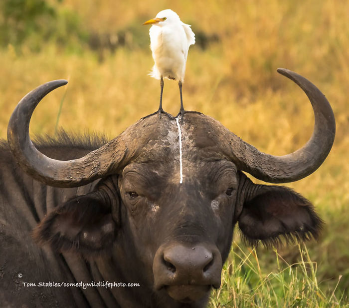 Comedy Wildlife Photography Awards 2016