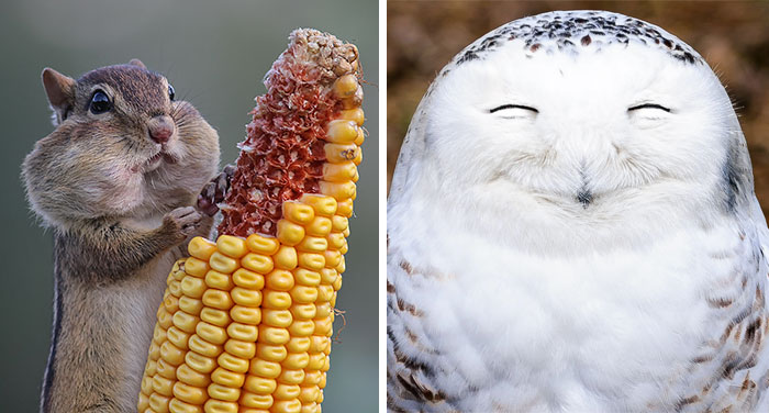 10+ Of The Funniest Entries From The 2016 Comedy Wildlife Photography Awards