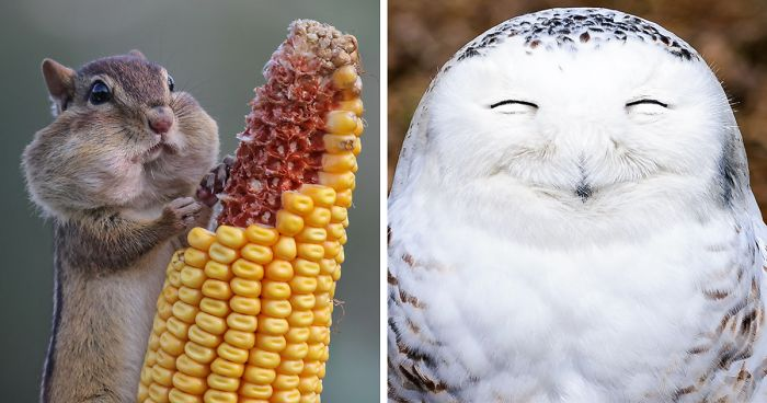 Image of: Winners 44 Of The Funniest Entries From The 2016 Comedy Wildlife Photography Awards Animals Bored Panda 44 Of The Funniest Entries From The 2016 Comedy Wildlife Photography
