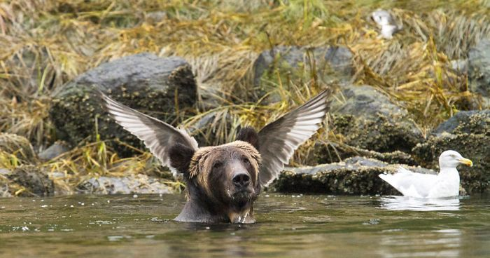 Image result for annual comedy wildlife photography