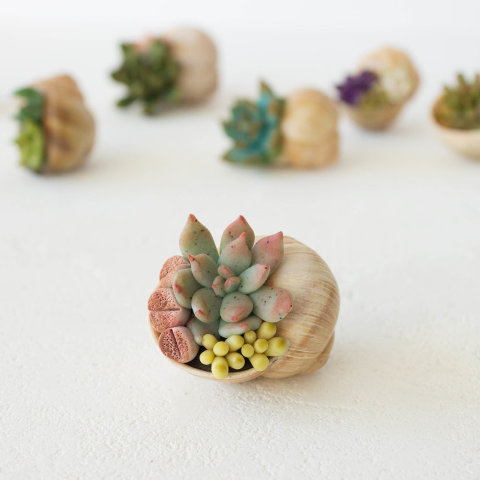 I Create Succulent-Inspired Home Decor Using Snail Shells Which I Found In The Countryside