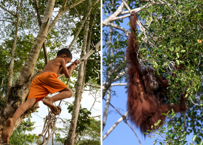 I've Photographed Kids Of Both Human & Non-Human Primates To Show Nature Conservation Importance For Future Generations