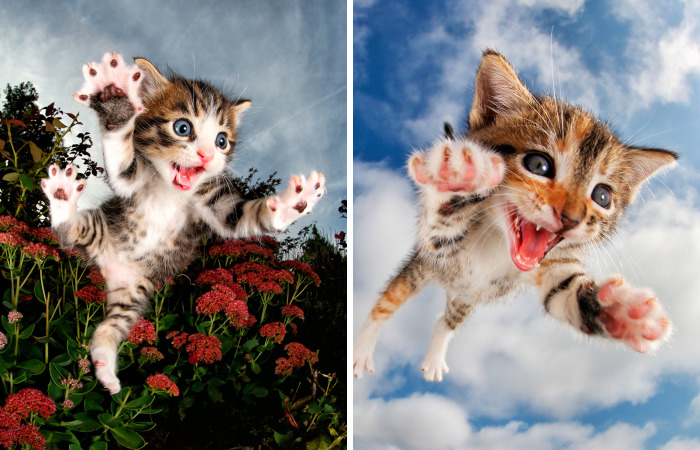 Rescue Kittens Caught In Mid-Pounce (11 Pics)