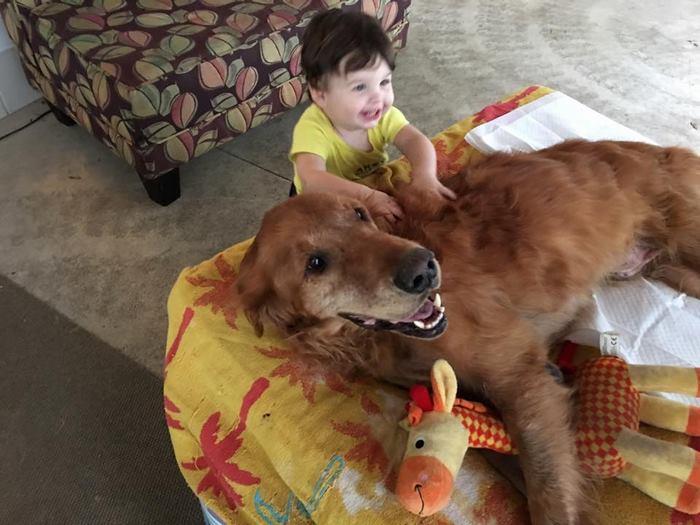 crippled-dog-rides-wagon-lymphoma-maverick-11