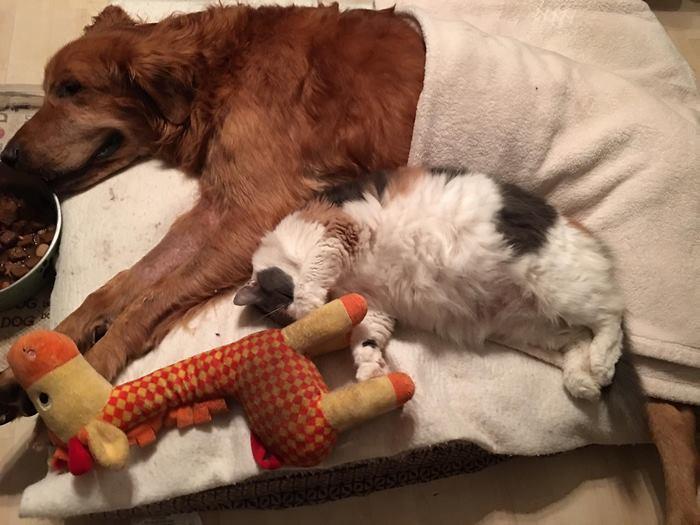 crippled-dog-rides-wagon-lymphoma-maverick-13