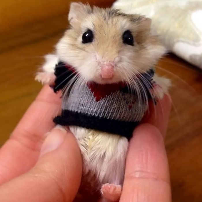 Unbearably Cute Hamster
