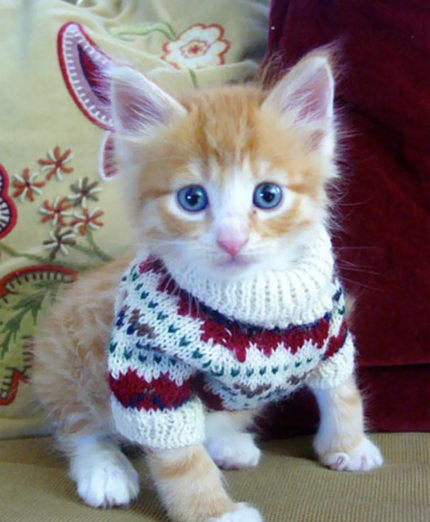 Tiny Sweater For Tiny Kitten