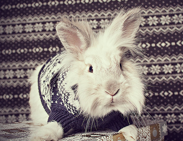 Snowey Hates His Ugly Sweater