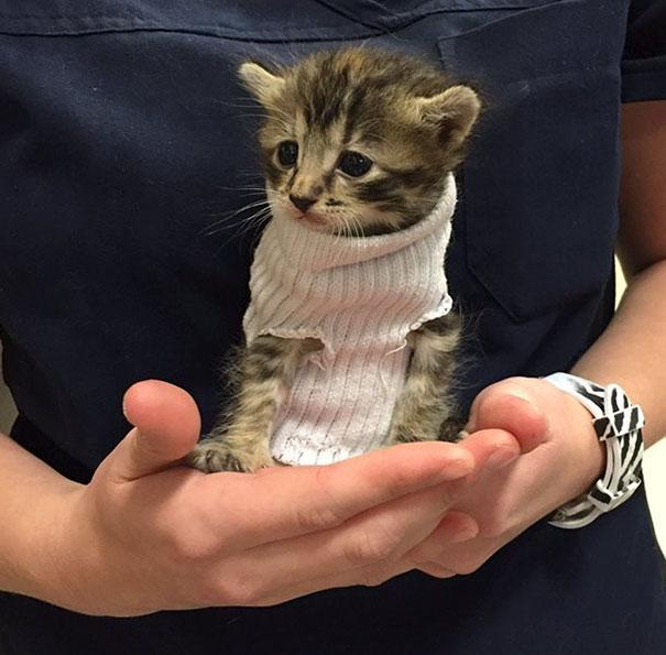 Kitten Rescued From Hurricane Matthew Gets Tiny Sock Sweater