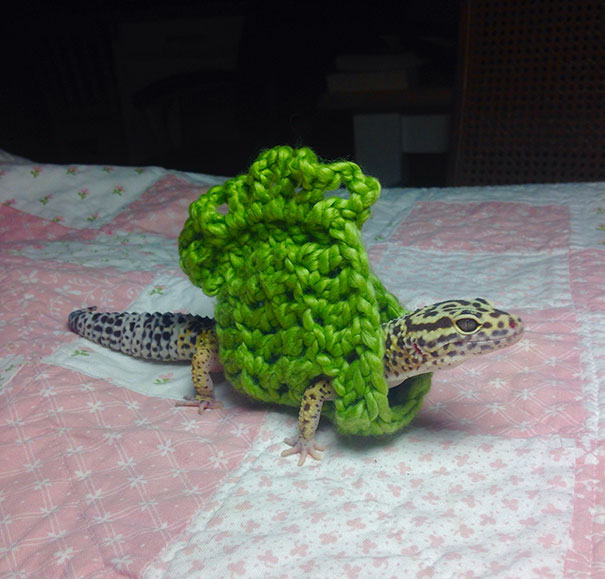 I Made My Pet Gecko A Little Sweater Today