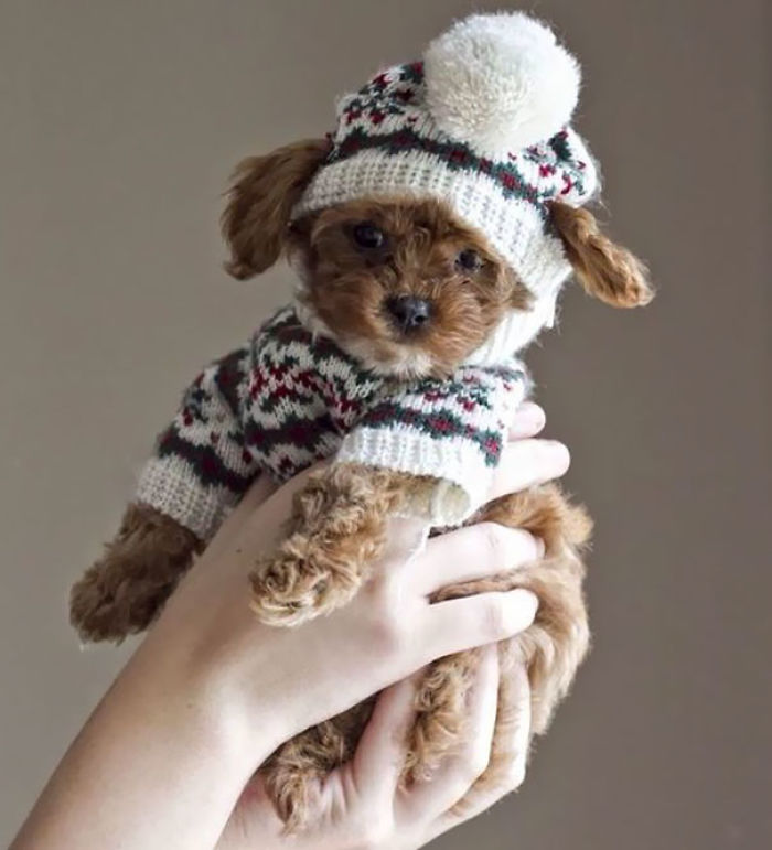 Winter Pup