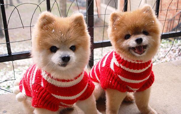 Teddy And Tj
