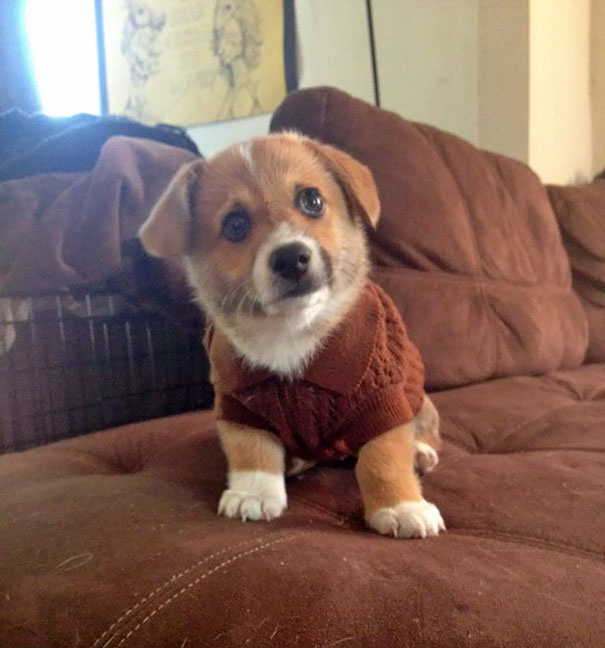 Tiny Animals In Tiny Sweaters That Will Make You Go Aww Steemit - 22 adorable animals wearing miniature sweaters